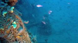 Relitto del rimorchiatore Silvio – Wreck of the tugboat Silvio