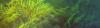 Vlcsnap-2016-08-23-19H23M05S232