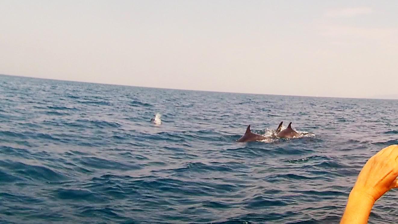 11-09-2016_delfini_73b