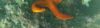 Stellarossa-2016-10-23-19H03M16S5