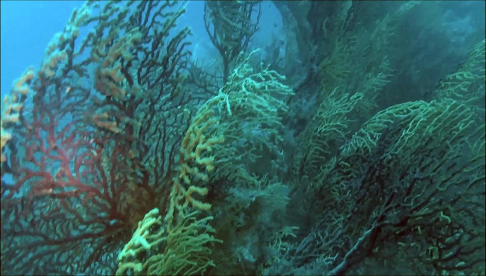 Submerged reef - Savalia Savaglia