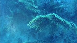 scogliera-sommersa1