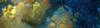 Corallo-2016-12-28-16H59M25S165-1