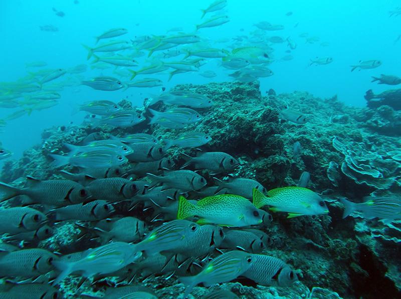 La Barriera Corallina di Nungwi - Zanzibar