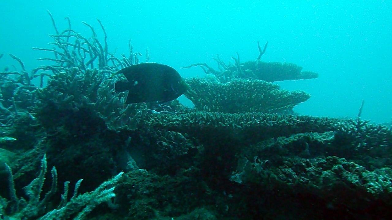 Nosy Be - Madagascar - Barriera Corallina II