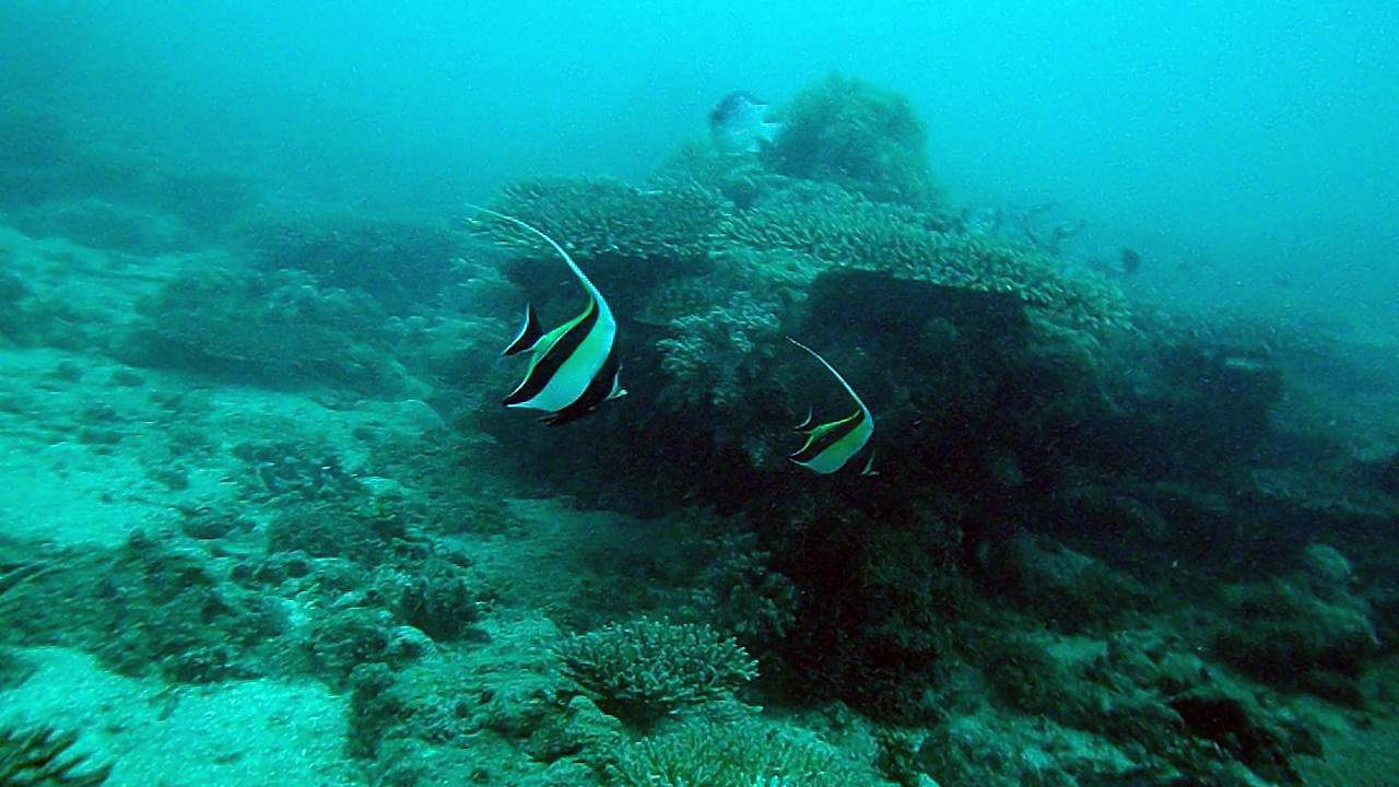 Nungwi Barrier Reef