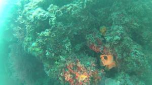 Bryozoans - Bryozoa