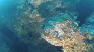 Sponges of the Mediterranean Sea
