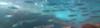 Muggine-2017-08-16-17H56M35S65