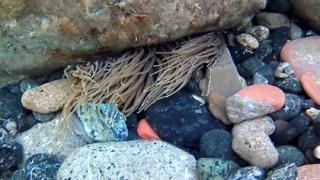 Snorkeling - Anemone