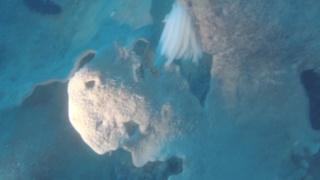 Le uova di Calamaro