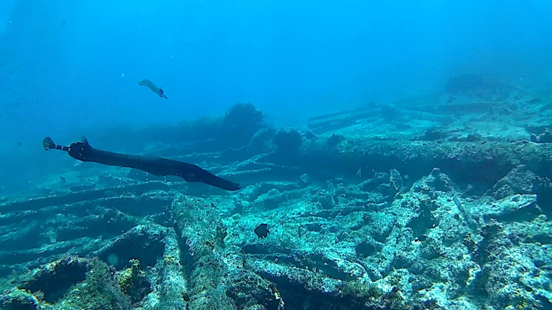 Pesce trombetta - Aulostomidae- intotheblue.it