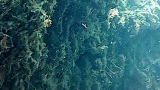 Matta di Posidonia Oceanica morta!