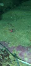 Vlcsnap-2018-04-22-21H47M10S154