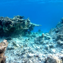 barriere corallina distrutta - reef destroyed