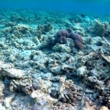coralli morti - dead corals