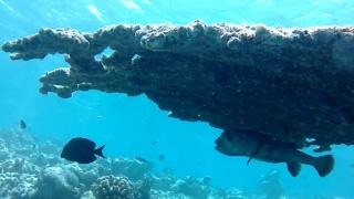 Il Pesce Istrice