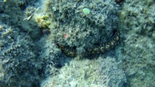 Murenidi - Muraenidae