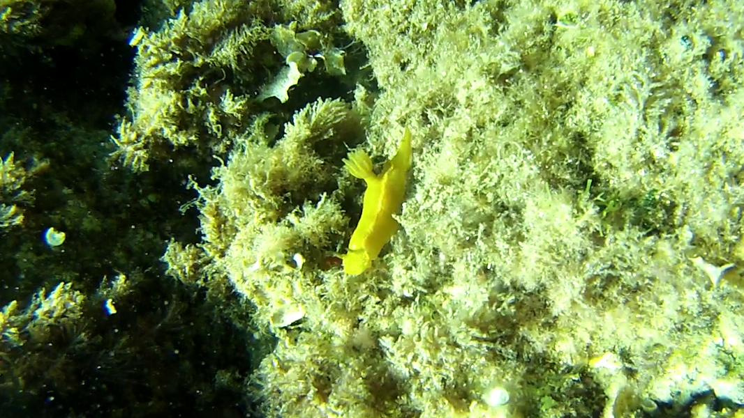 Nudibranchia nudibranchi Nudibranchs intotheblue.it