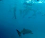 Snorkeling Tra Gli Squali Intotheblue.it