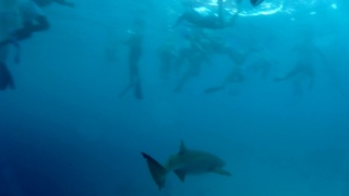 Dancing among the Sharks…