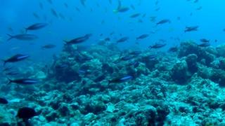 I Pesci Fucilieri