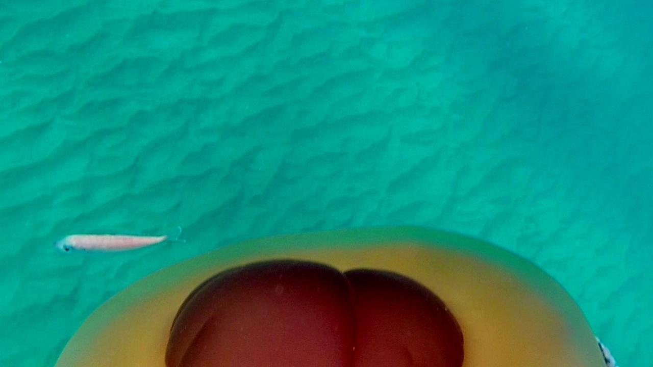 Cassiopea mediterranea - Cotylorhiza tuberculata