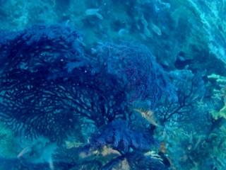 Paramuricea Clavata And Savalia Savaglia - Intotheblue.it