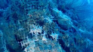 Rete da Pesca Abbandonata Colonizzata da Spugne