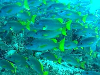 Branco Di Pesci - Herd Of Fish - Intotheblue.it