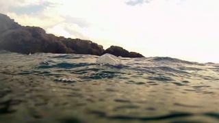 Velella velella - Sea raft