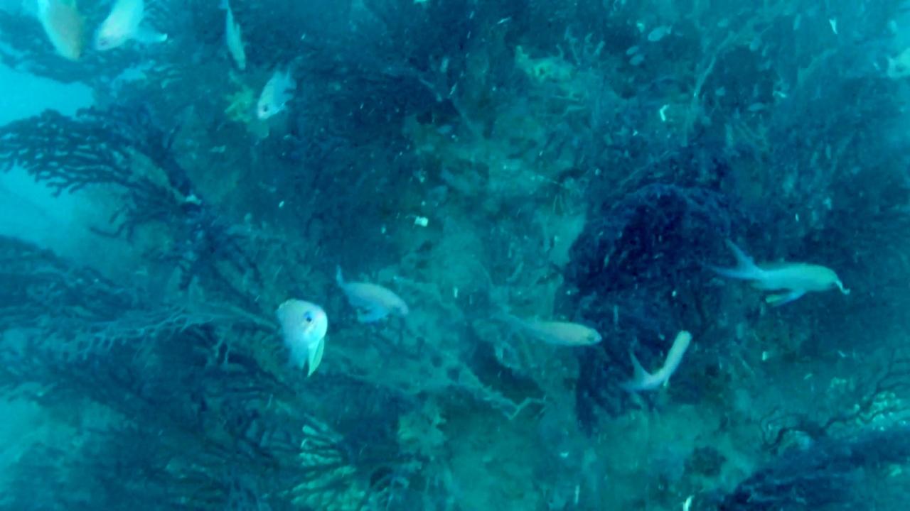 Mediterraneo: panorama sommerso mozzafiato - Mediterranean sea: underwater panorama breathtaking - intotheblue.it