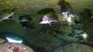 La buca delle Corvine Brown Meagles hole intotheblue.it