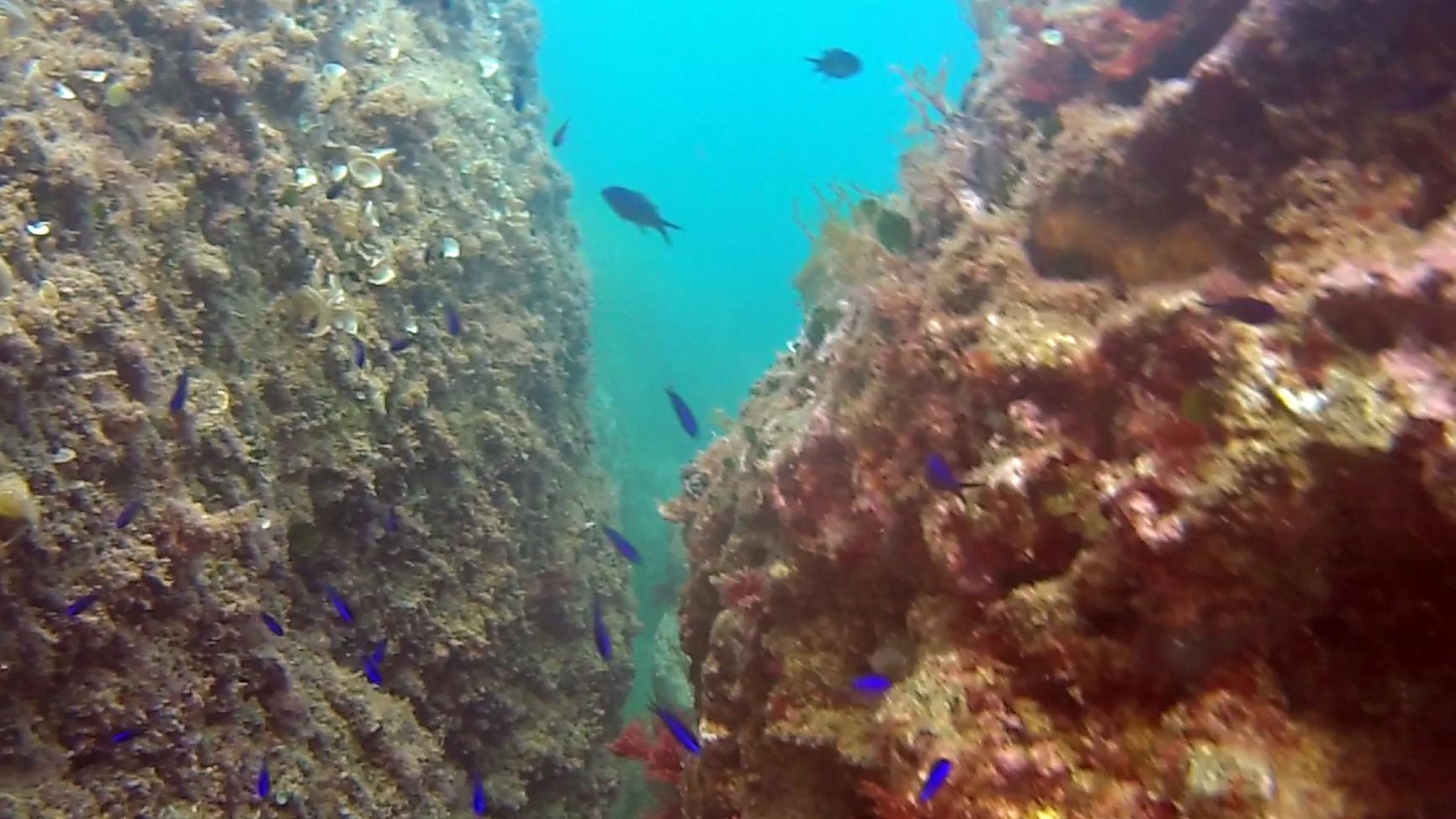 Pesci Blu Blue Fish - intotheblue.it