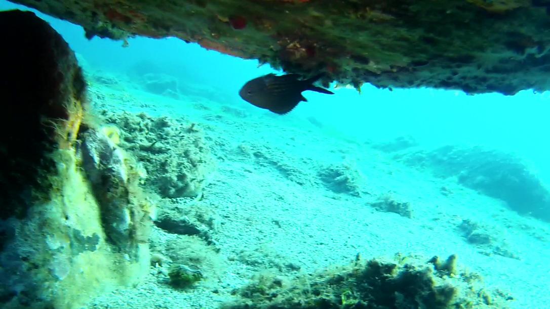 I pesci possono nuotare a testa in giù? Can fish swim upside down? intotheblue.it