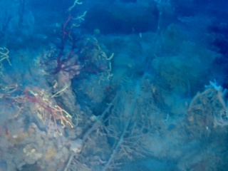 Le Reti Da Pesca Perse Sono Un Danno Ambientale - Lost Fishing Nets Are Un Environmentale Damage - Intotheblue.it