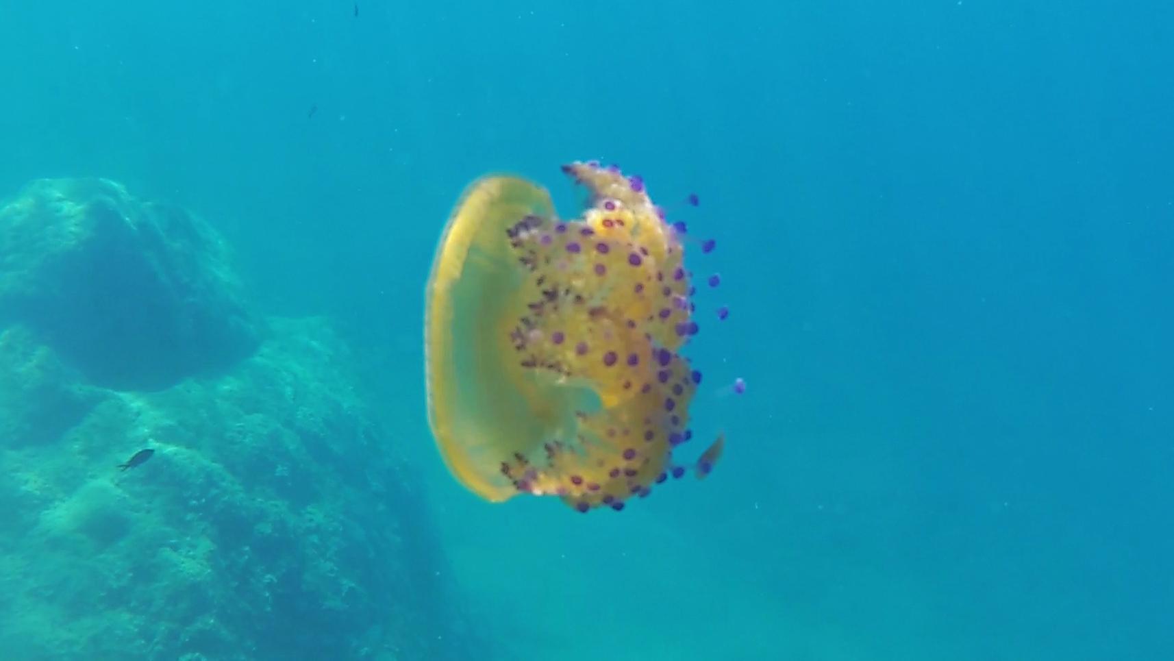 Simbiosi tra pesce e medusa - intotheblue.it