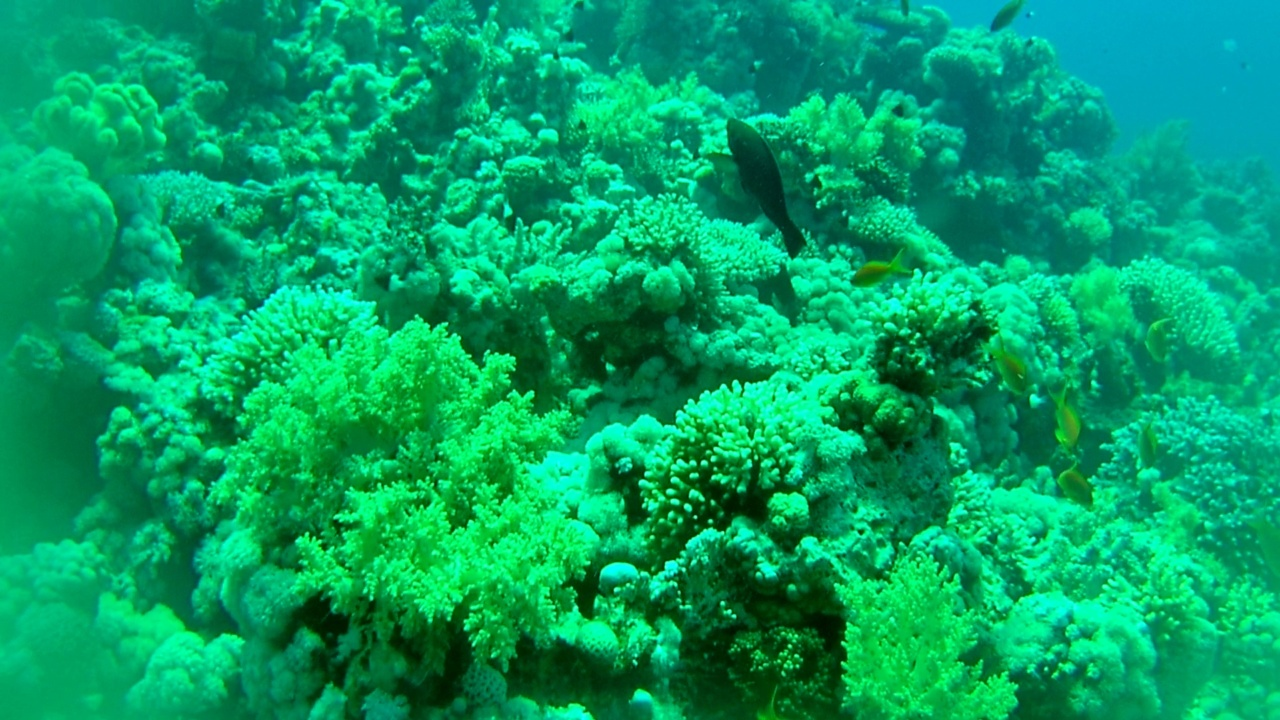 La Barriera Corallina di Sharm el-Sheikh - The Sharm el-Sheikh Coral Reef - intotheblue.it