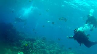 Sharm el-Sheikh Coral Reef