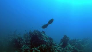 Anche i pesci a volte si incazzano