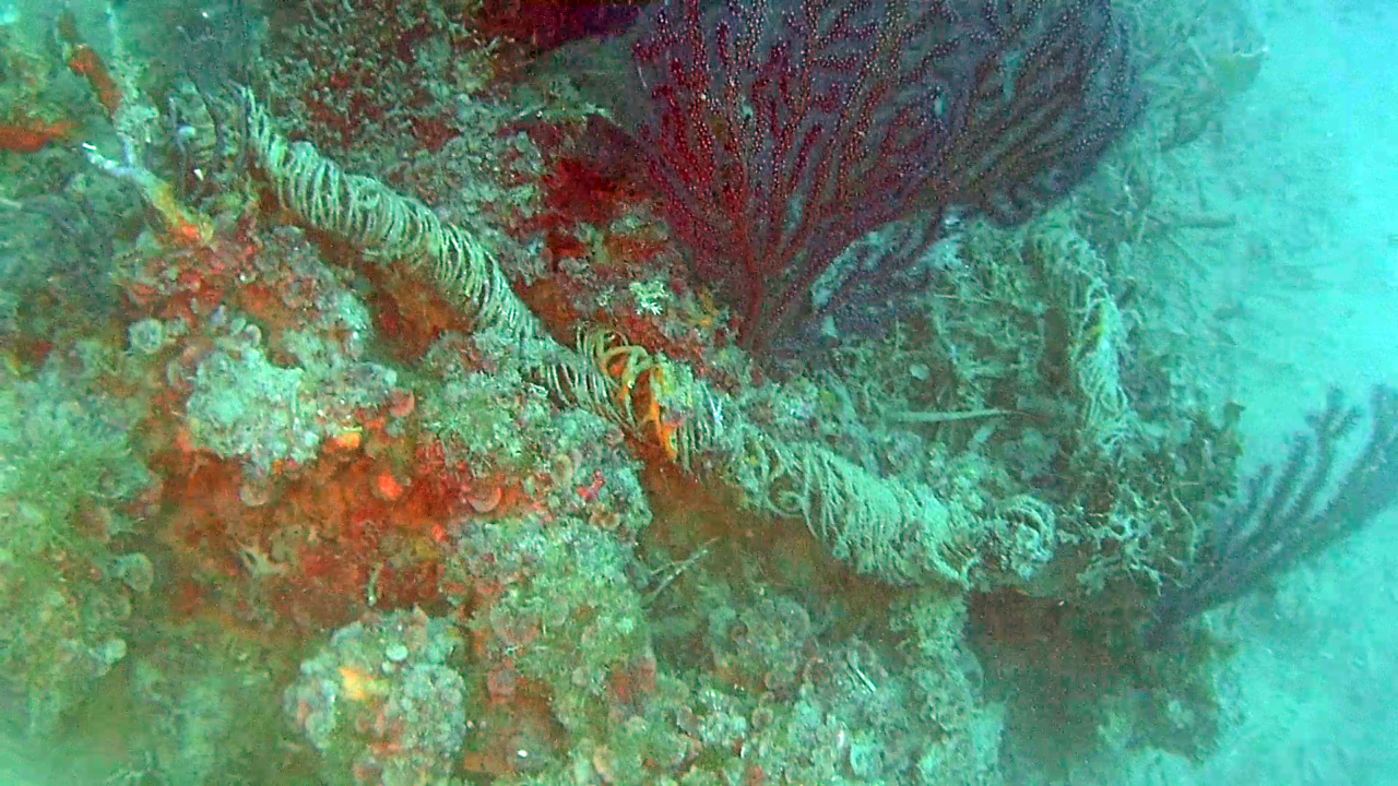 Mina navale della seconda Guerra Mondiale (filo per impostare la profondità) - Naval mine of the Second World War (wire to set the depth) - intotheblue.it