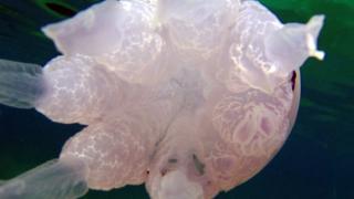 Simmetria e organismi marini