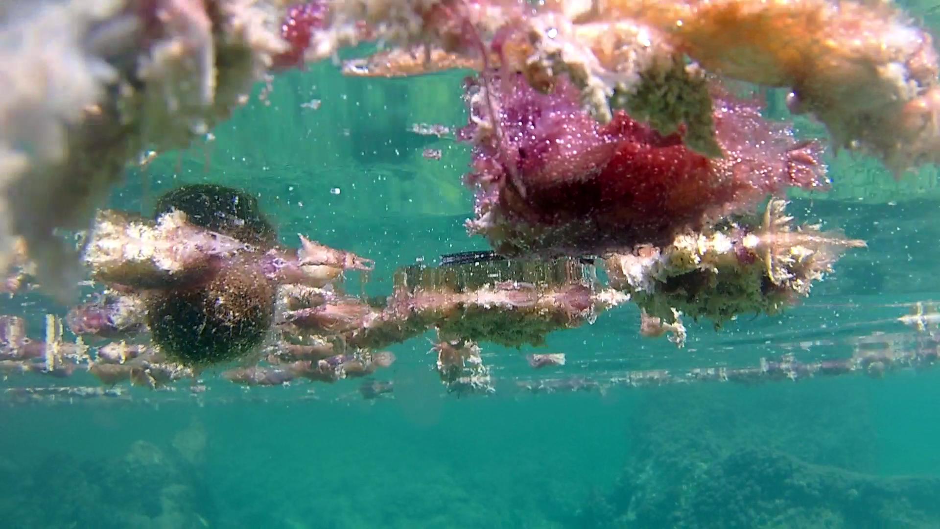 Mucillagine causata da riscaldamento marino -Mucilage caused by marine heating - intotheblue.it