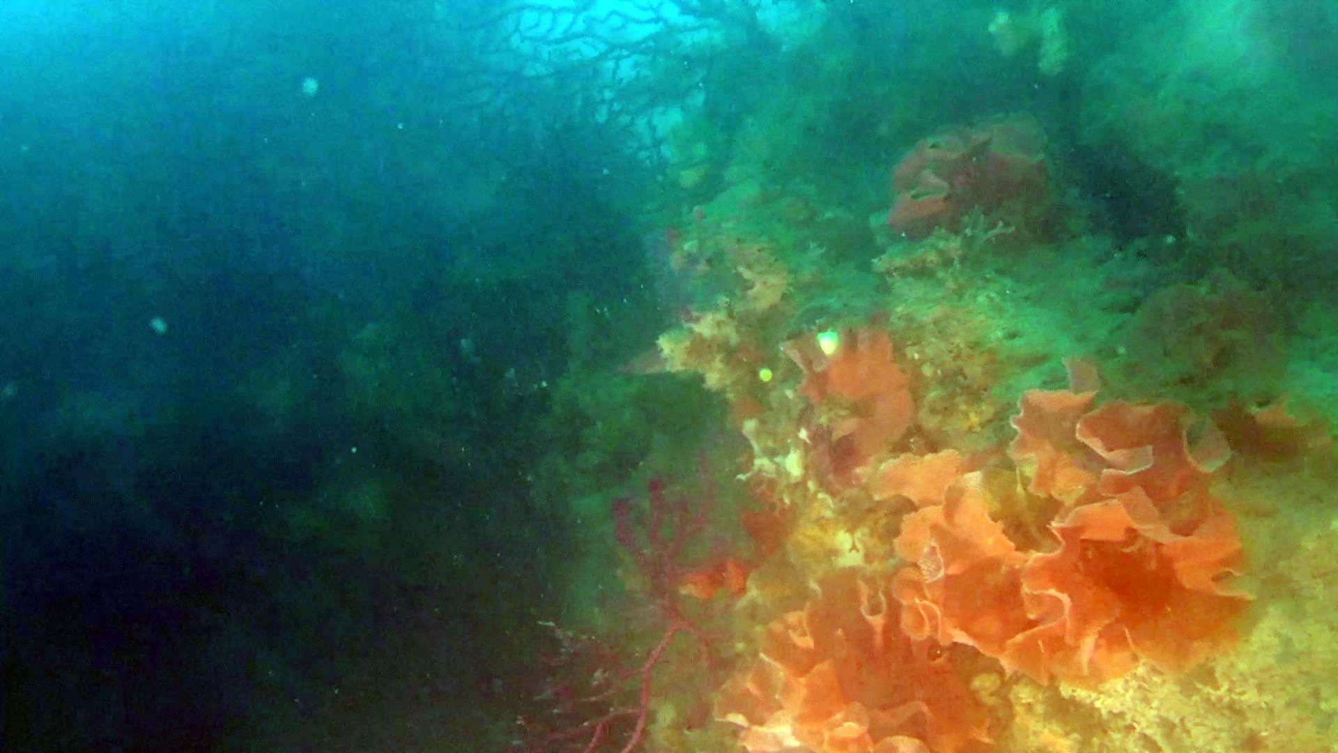 Trina di Mare - Reteporella Grimaldii - Briozoo - intotheblue.it