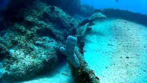 Azure Vase Sponge - Callyspongia Plicifera