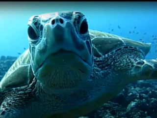 Tartaruga Marina - Sea ​​Turtle - Intotheblue.it