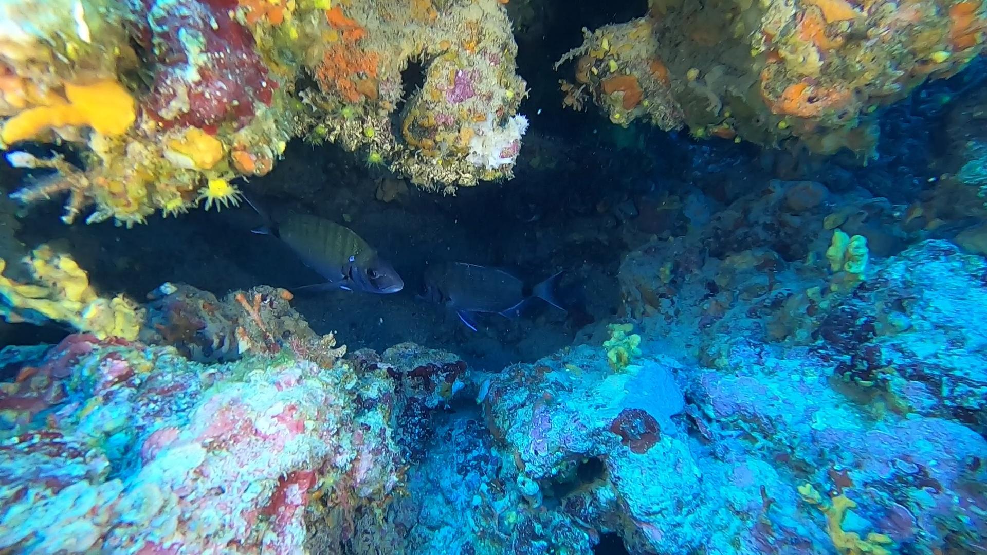 La buca dei Saraghi The hole of Seabream intotheblue.it