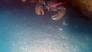 TheEuropean lobster
