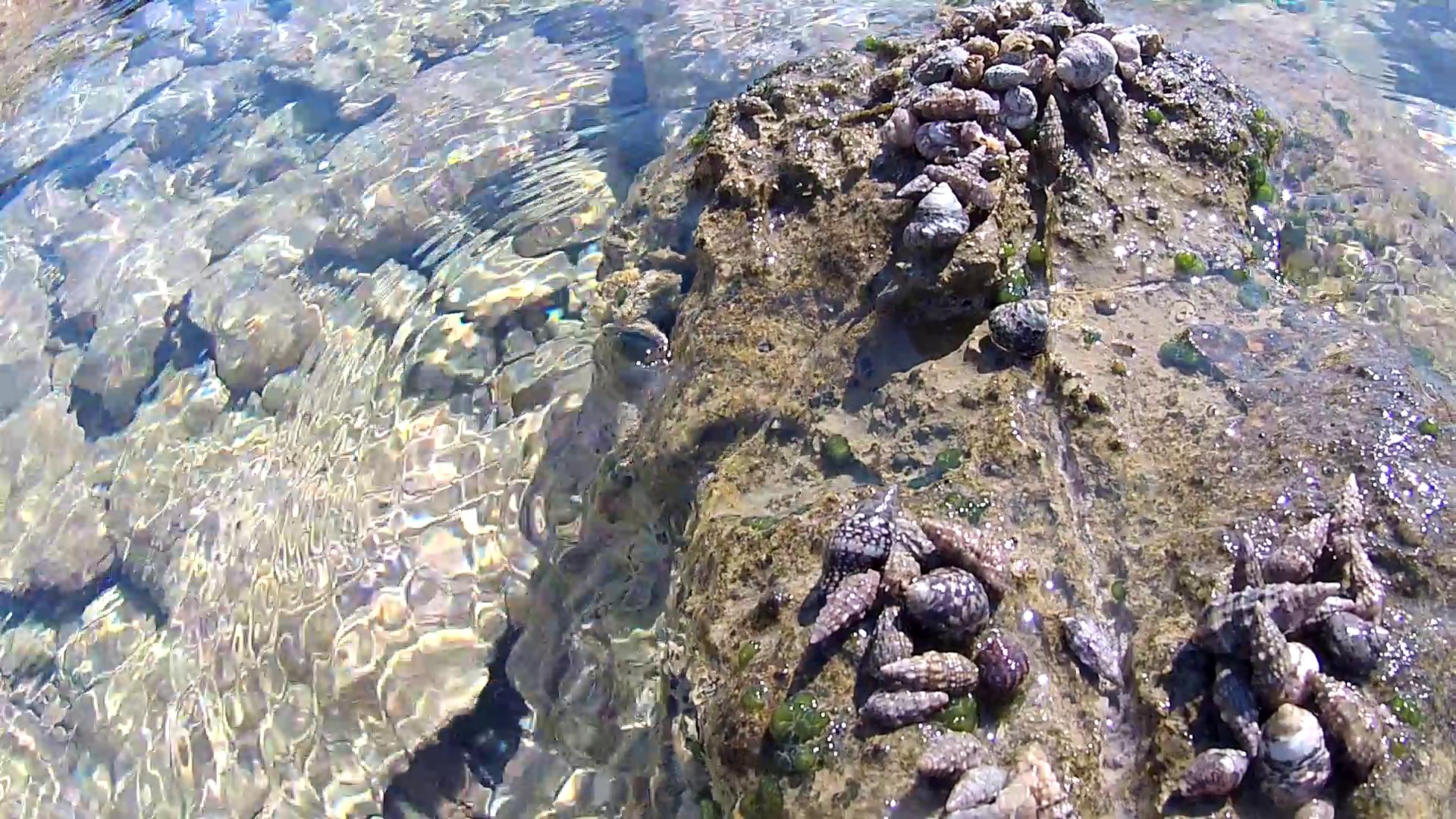 "Paguri in riproduzione - Crabs ""Erythropus Clibanarius"" - Meeting for reproduce - intotheblue.it"