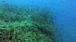 Prateria di Posidonia - Posidonia oceanica - Neptune grass - intotheblue.it